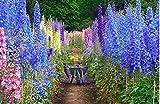 花の種キンポウゲミックス - デルフィニウムCultorum家族の庭鉢植え植物の種子ビーアンドバタフライ30個Y015