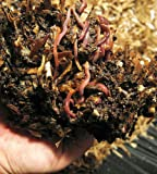 50 VermiPod Encapsulated Earthworm Cocoons - Easy/Clean Way to Worm Your Garden