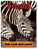 Zebras! Learn About Zebras and Enjoy Colorful Pictures - Look and Learn! (50+ Photos of Zebras)