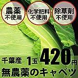 無農薬・無化学肥料のキャベツ 1玉