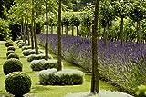 Image de Design für pflegeleichte Gärten - Das große Ideenbuch (Garten- und Ideenbücher BJVV)