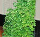 DAIM サイドロープ付 緑のカーテンネット 2.7×5m 10cm角目
