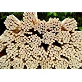 50 Rattan Reed Diffuser Replacement Sticks 12 X 3mm