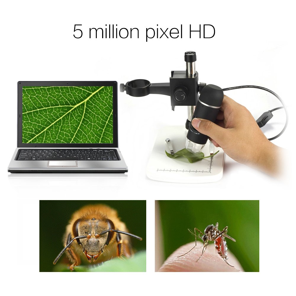 DBPOWER Digital Mikroskop Test