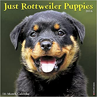 2016 Just Rottweiler Puppies Wall Calendar