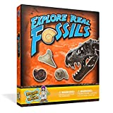 Starter Fossil Kit - A Collection of 10 Genuine Fossil Specimens!by Discover with Dr. Cool