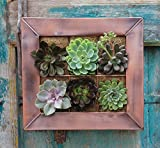 Live Green AquaSav Coco Vertical Mini Wall Planter with Copper Finish Frame