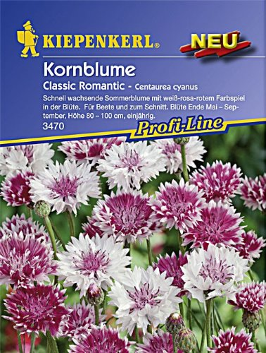 Kiepenkerl Kornblume Classic Romantic