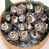 島根県産 活サザエ 約2kg(20個-22個入、天然)