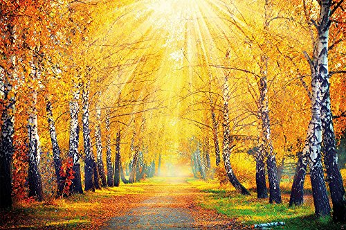 GREAT ART Herbstlicher Wald Wanddekoration - Wandbild Waldlichtung Motiv XXL Poster (140 x 100 cm)
