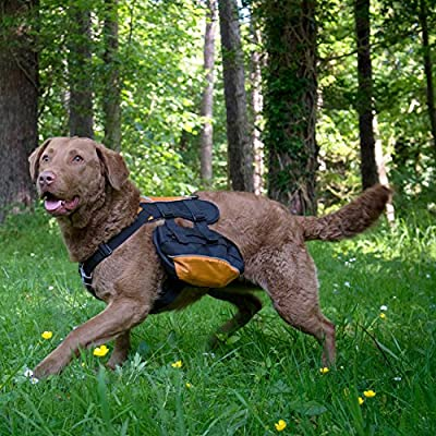 Kurgo Wander Dog Backpack