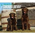 Chocolate Labrador Retriever - For th...