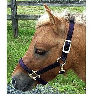 Intrepid International Nylon Miniature Horse Halter, Black, Large