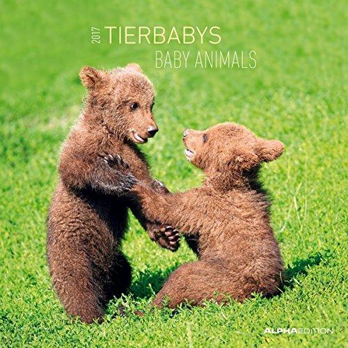 Tierbabys 2017 - Animal Babys - Broschürenkalender (30 x 60 geöffnet) - Tierkalender - Wandplaner