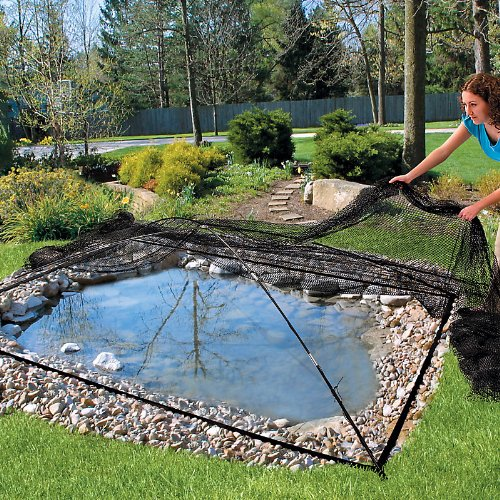 Complimentary water features for your herb garden home for Amazon fish ponds