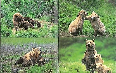 クマよ (たくさんのふしぎ傑作集)