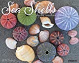 Sea Shells 2014 Wall Calendar