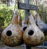 "(VGOH)~""MARTIN BIRDHOUSE"" GOURD~Seed!!!!~~~Extremely Prolific!~~Hardshell Variety!"