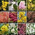 Shrub Collection Bare Root Bushes (12 shrubs) OGD240