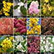 Complete Shrub Collection Bare Root Bushes (12 Pieces)