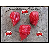 Naga Viper 10 Seeds -Ultra Hot- 1.4 Mi. Scoville Sell By Samenchilishop(world)