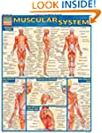Muscular System Laminate Reference Ch...