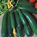 Kings Seeds - Courgette Zucchini - 20 Seeds