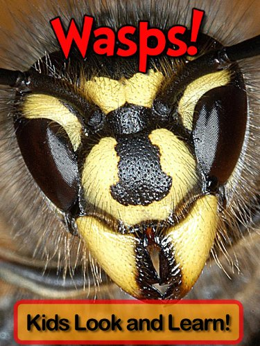 wasps-learn-about-wasps-and-enjoy-colorful-pictures-look-and-learn-50-photos-of-wasps