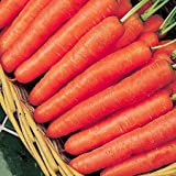 Carrot - Early Nantes 2 - 1000 seeds