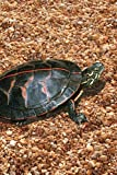 Painted Turtle Blank Journal