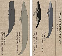 HomArt Whale Chart Matches Match Box Set of 2