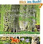 Deutschlands alte Buchenw�lder: UNESC...