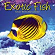 Exotic Fish 2012 Wall Calendar #30407-12