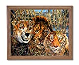 African Phases Cat Lion Tiger Animal Wildlife Home Decor Wall Picture Oak Framed Art Print
