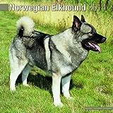 Norwegian Elkhound 2014 Wall Calendar