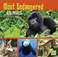 The Most Endangered Animals in the World (All About Animals)