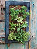 Live Green AquaSav Coco Vertical Wall Planter with Black Zinc Frame
