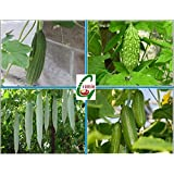 Hybrid Vegetable Seeds Combo Pack 4 In 1 : Ridge, Bitter, Snake Gourd $ Cucumber Green Seeds For Kitchen Terrace...