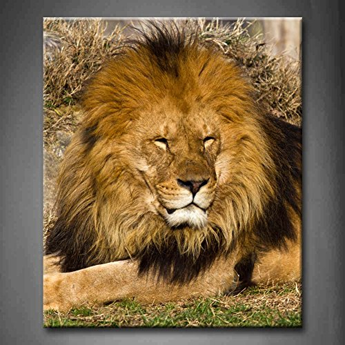 Lion The King A Relaxed African Lion Staring In The Zoo Grassland Wall Art Painting The Picture Print On Canvas Animal Pictures For Home Decor Decoration Gift (Stretched By Wooden Frame,Ready To Hang)