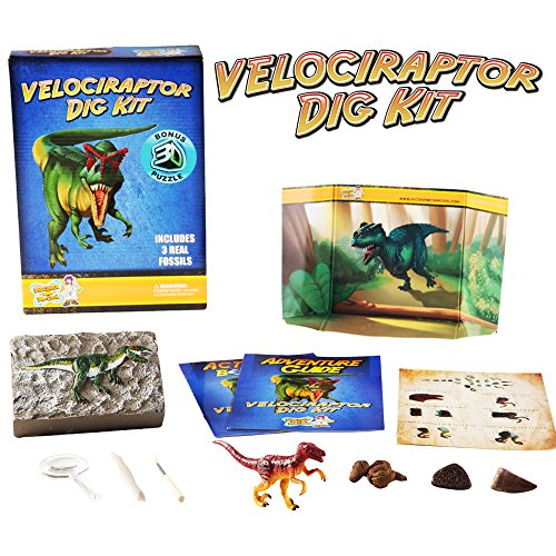 Velociraptor Dinosaur Dig Kit -Excavate 3 Real Dino Fossils!