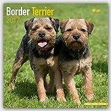 Border Terrier 2017: Original Avonside-Kalender [Mehrsprachig] [Kalender] (Wall-Kalender)