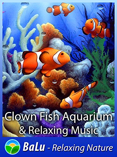 Clown Fish Aquarium & Relaxing Music