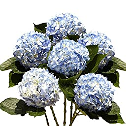 Blue Hydrangea Flower | Hydrangea Blue 10 Flowers