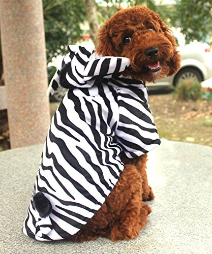 Pet C (Zebra Cat Costume)
