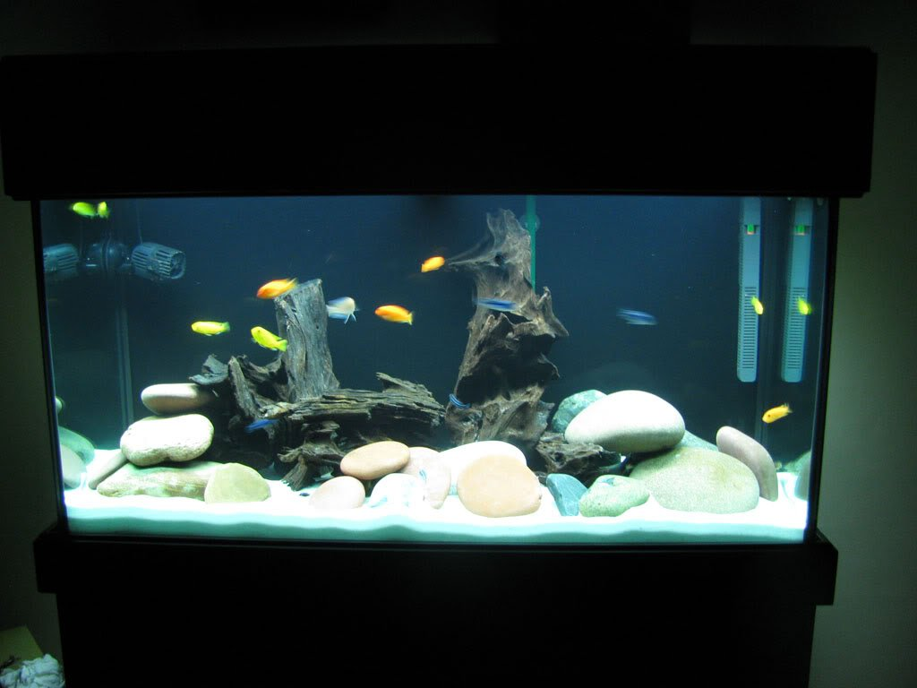 Fish aquarium online delhi - Colourful Aquarium White Color Sand Gravel 1kg Sugar Type Aquarium Decoration