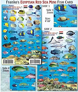 Egyptian Red Reef Creatures Guide for Scuba Divers and Snorkelers