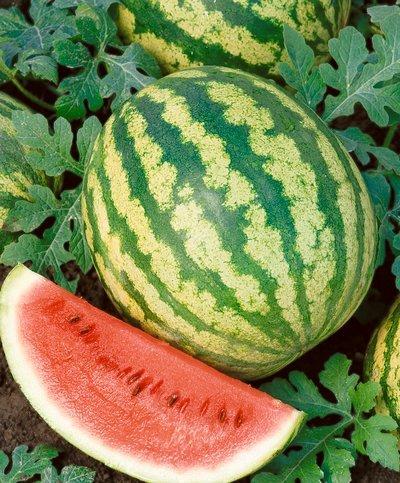 Crimson Sweet Watermelon (Citrullus lanatus) Seeds - Citrullus Lanatus - 2 Grams - Approx 40 Gardening Seeds - Vegetable Garden Seed