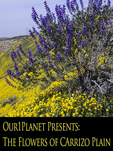Our1Planet Presents: The Flowers of Carrizo Plain