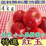 産地直送 長野産 減農薬・有機肥料栽培 樹上完熟紅玉 A品 約4kg小玉16~25個入 完熟 リンゴ りんご