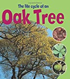 Learning About Life Cycles: The Life Cycle of an Oak Tree Ruth Thomson
